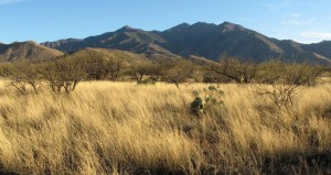 Santa Rita Mountains, Pima County, AZ (Courtesy Mitch McClaran)