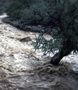 Southern Arizona Monsoon Flooding (Courtesy Michael Collier)
